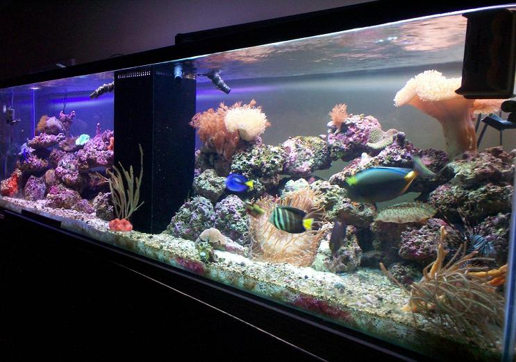 T N T Saltwater Aquariums Home Page Site Updated 31 May 2017