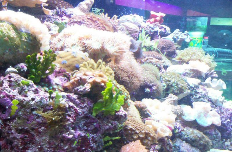 T-n-T Saltwater Aquariums - Home Page Site Updated 4-Sept -2019